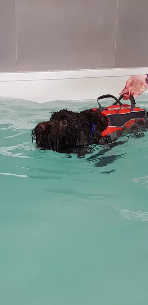 Canine Hydrotherapy
