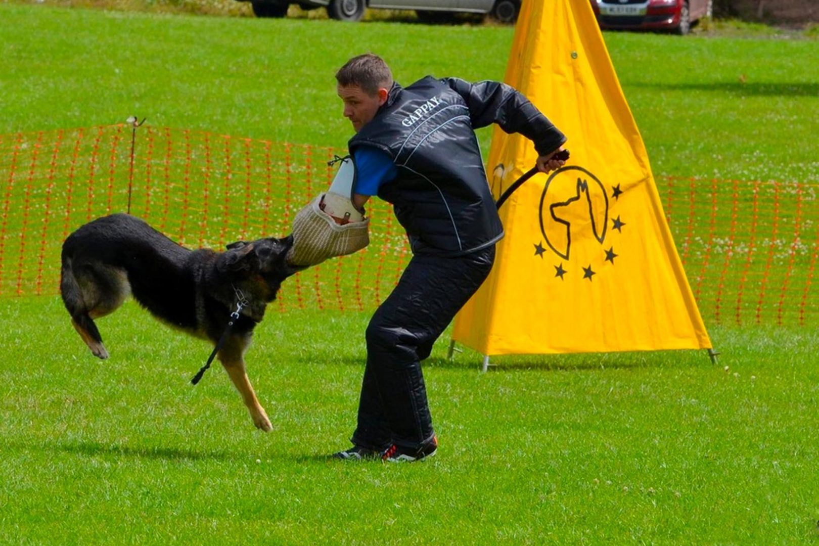 Specialist Dog Training Cheshire